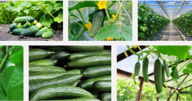 cucumber business nigeria